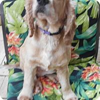 Adopt A Pet :: Grayson -Adopted! - Kannapolis, NC