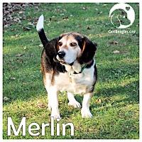 Adopt A Pet :: Merlin - Novi, MI