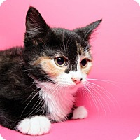 Adopt A Pet :: Cass Elliot - Jersey City, NJ