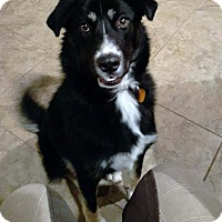 Adopt A Pet :: Ryker - Adopted! - San Diego, CA