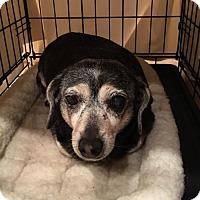 Adopt A Pet :: Crook ~ in foster - Lake Jackson, TX