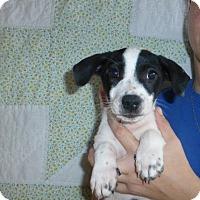 Adopt A Pet :: Kia - Oviedo, FL