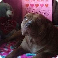 Adopt A Pet :: Jade - Hialeah, FL