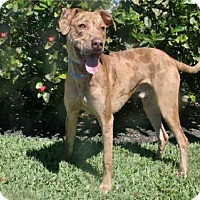 Adopt A Pet :: ZIP - West Palm Beach, FL