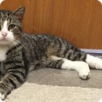 Adopt A Pet :: Masimo - Manchester, CT