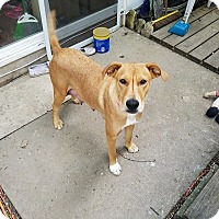 Adopt A Pet :: Starlet - West Bend, WI