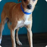 Adopt A Pet :: Bob - Waldorf, MD