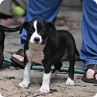 Adopt A Pet :: Jenee - Groton, MA