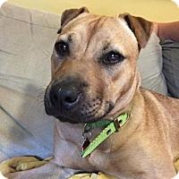 Adopt A Pet :: Daisy - Bellbrook, OH