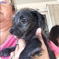 Adopt A Pet :: Franco - Thousand Oaks, CA