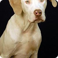 Adopt A Pet :: Kodi - Newland, NC