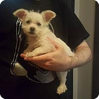 Adopt A Pet :: Elsa - Burbank, CA