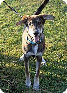 Shepherd (Unknown Type)/Hound (Unknown Type) Mix Puppy for adoption in Joliet, Illinois - Whopper