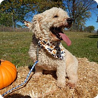 Adopt A Pet :: Tuffy - Bucyrus, OH
