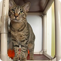 Adopt A Pet :: Azeri - East Brunswick, NJ
