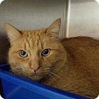 Adopt A Pet :: Murphy - Elyria, OH