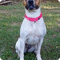 Pit Bull Terrier Mix Dog for adoption in Tomball, Texas - Heather