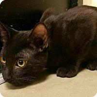 Adopt A Pet :: Carob - Hesperia, CA