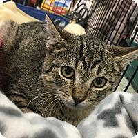 Adopt A Pet :: Teddy - Smithtown, NY
