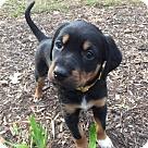 Adopt A Pet :: Ginny (Yellow)