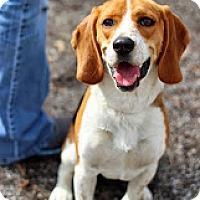Adopt A Pet :: Newton - Tinton Falls, NJ