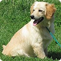 Adopt A Pet :: Alf - Providence, RI