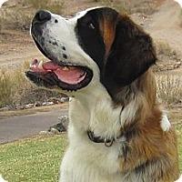 Adopt A Pet :: Leroy - Glendale, AZ