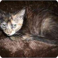 Adopt A Pet :: Kitten 1 - Richmond, VA