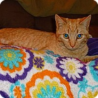 Adopt A Pet :: Tiger Lily - Xenia, OH