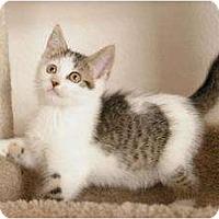 Adopt A Pet :: Nutmeg - Sacramento, CA