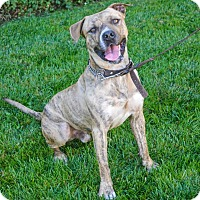 Adopt A Pet :: Sawyer - Lincoln, CA