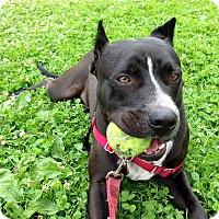 Adopt A Pet :: Wrigley - Bellflower, CA