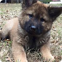 Adopt A Pet :: GRACE - CHAMPAIGN, IL