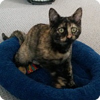 Adopt A Pet :: Amber - Berkeley Hts, NJ