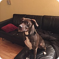 Adopt A Pet :: Max, sweet and athletic boy - Sacramento, CA