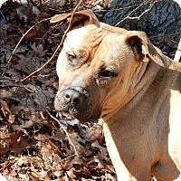 Adopt A Pet :: Roosevelt - Long Beach, NY