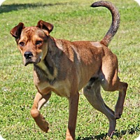 Adopt A Pet :: Zipper - Savannah, TN