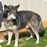 Adopt A Pet :: Heston - Clay, AL