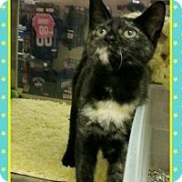 Adopt A Pet :: Lori - Atco, NJ