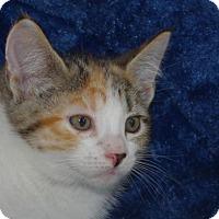 Adopt A Pet :: Maria - Longview, WA