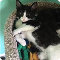 Adopt A Pet :: Snow - Marietta, GA