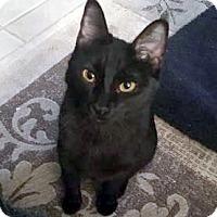 Adopt A Pet :: Jennifer - Bulverde, TX