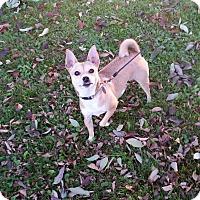 Adopt A Pet :: Bailey - Canton, OH
