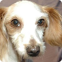 Adopt A Pet :: Janie - Elmira, CA