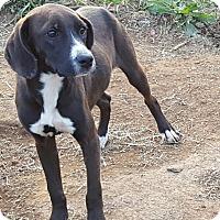 Adopt A Pet :: Conrad - Ararat, VA