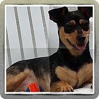 Adopt A Pet :: Luca - Weeki Wachee, FL