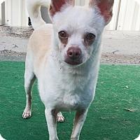 Adopt A Pet :: Benji - Durham, NC