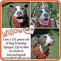 Adopt A Pet :: Willow - Orlando, FL