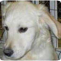 Adopt A Pet :: Buddy ADOPTION PENDING! - Antioch, IL
