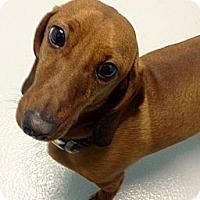 Adopt A Pet :: Fritz - Muskegon, MI